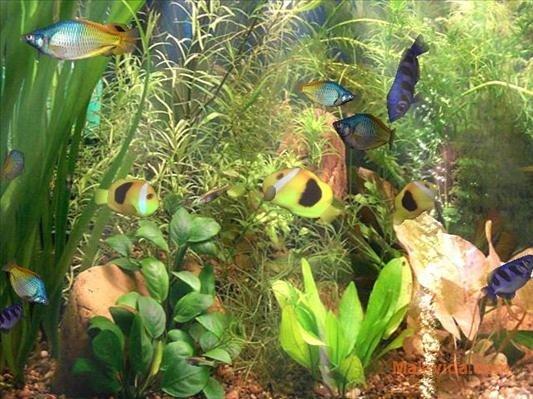 Aqua 3D Screensaver image 5