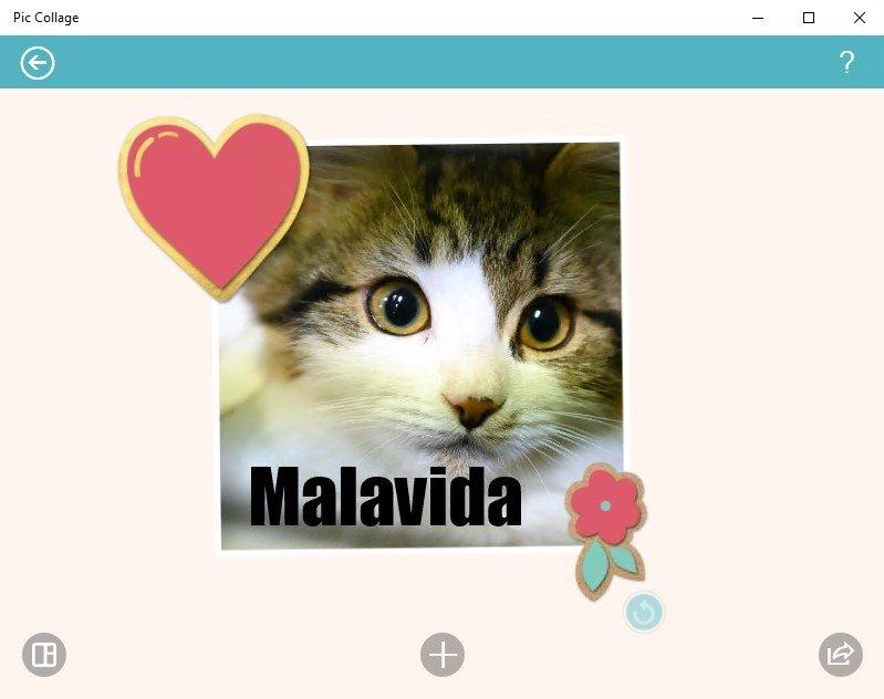 Descargar Pic Collage para PC - Gratis en Español