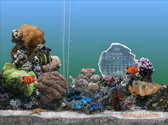 serenescreen aquarium 3 gratuitement