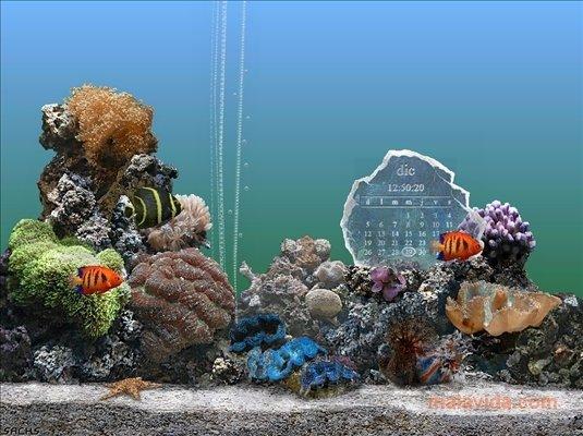 SereneScreen Marine Aquarium image 4