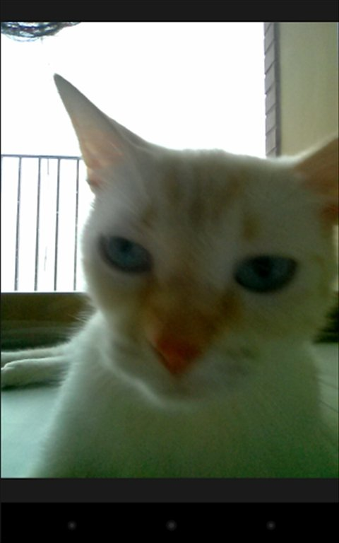 Snapcat Android image 5