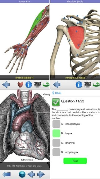 Visual Anatomy - Download for iPhone Free