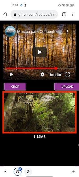Opciones del GIF